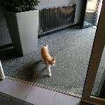 there no location in Amsterdam without a cat :)