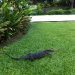Big Lizard at Racha