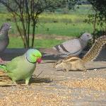 biodiversity in village