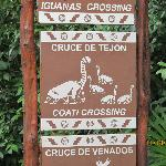 Watch out for the coati's and iguana's...no kidding!