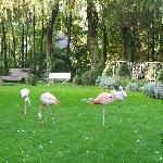 Jardim com flamingos.