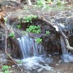 Small waterfalls from our natural springs at our river front!