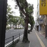 Foto de B&B Park Hotel Kagoshima Annex
