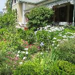 Amazing scented garden!