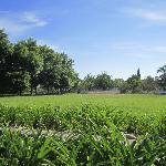A wander round stellenbosch