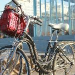 The rented bikes
