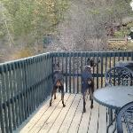 The dogs loved watching the world from the private deck of cabin 8