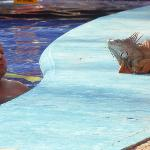 piscine d adulte