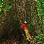Awe inspiring tree