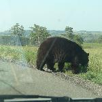 black bear right at road