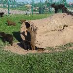 baby bears playing