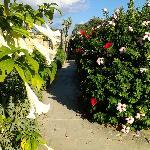 "flowery ""corridor"""
