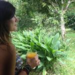 fresh mango juice from the tree!
