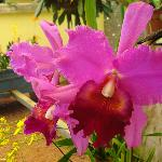Botanical Orchid Garden Photo