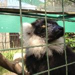 Monkey Town Primate Centre