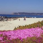 #1 Beach Coronado9