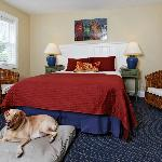 Some Rooms are Pet Friendly