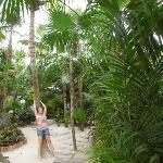 in the jungle...