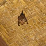 Bat in our bathroom