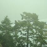 Lost Coast - Trees through the fog.