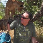 With the lion cubs in Senegal