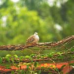 Here birdie