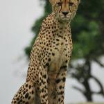 Le safari de l'hôtel