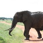 safari tzavo est