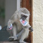 singe voleur