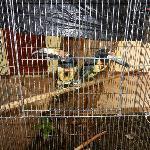 Tucan Birds
