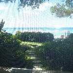 view from hotel room, dolphin wing rm 110 (screen door was closed that is the lines you see)