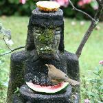 Birdwatching while breakfast