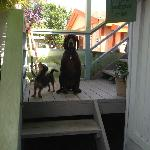 Guesthouse pets Poppy (little) and Jock (large)