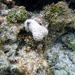 sea worm and sponge