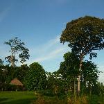 Chambre et Forêt