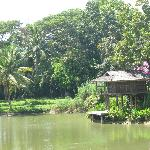 View of Lagoon in the Hotel Grounds
