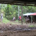 Horseback Riding w/ Alejandro
