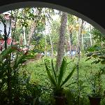 looking out from the veranda