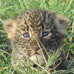 How cute?!