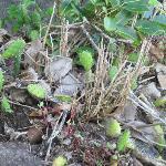 smaller cacti