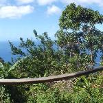 A view from the Gros Piton (left) and Petit Piton (right) from one of the view point.