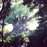 animal kingdom was great!