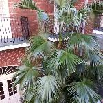 huge palm in courtyard