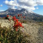 View of Mt St Helens