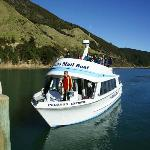 The Pelorus Mail Boat arriving on its weekly delivery