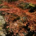 渓谷に紅葉