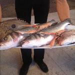 The fish selection of the day, Villa Ruza