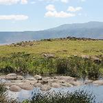 Hippos in the crater