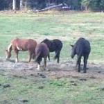 Horses at Mahoosuc Inn