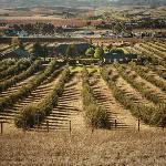 20 Acres of Olive Orchards